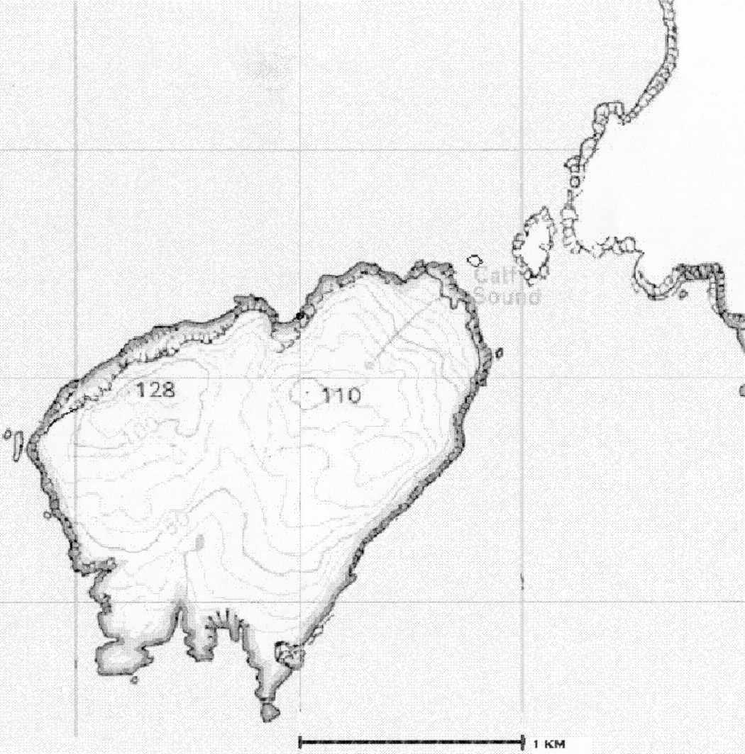 Insula Maledictus Maps - Calf map